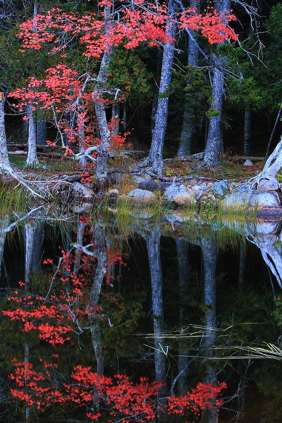 Red Oak on a forest pond - Colors of the lovely planet