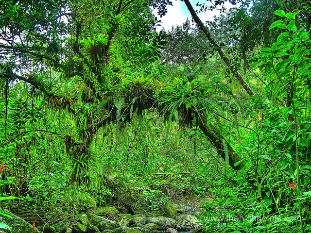 A beautiful photo of a rain forest by Camerons Personal Page