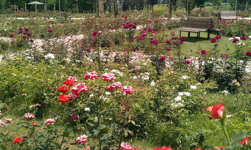 Rose and Jasmine Garden of Islamabad - Image: Raja Mubeen Iqbal