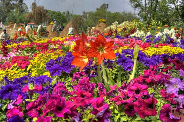 Flower Show Arrangement - Rose and Jasmine Garden - Photo: LightSkapes via flickr