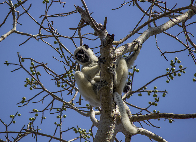 Flora & Fauna - Forest of Knives - Madagascar - Photo by jens_m2012