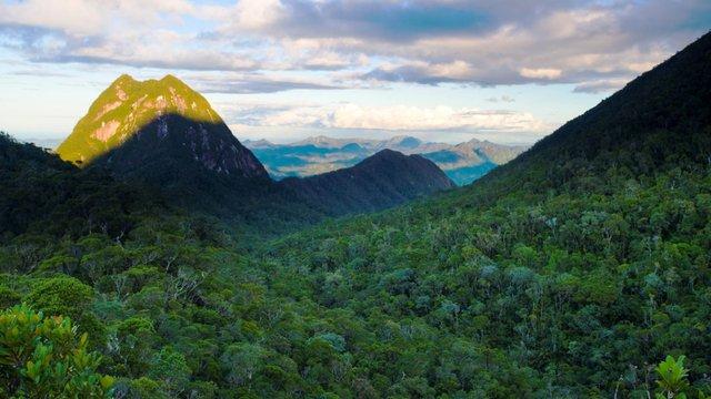 Save the landscape of Silky Sifaka of Madagascar: The threatened large lemur