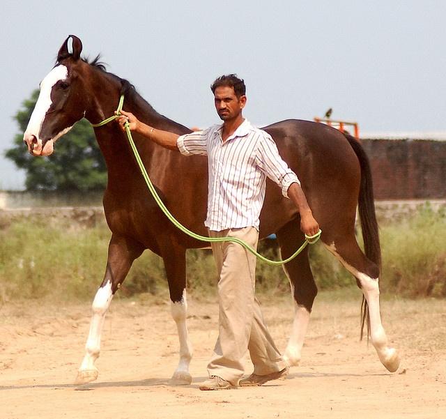 Kathiawari. Image  by manu sharma303