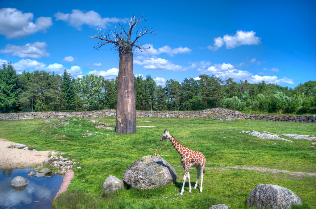 Kristiansand zoo and amusement park in Norway Image bytomskarning