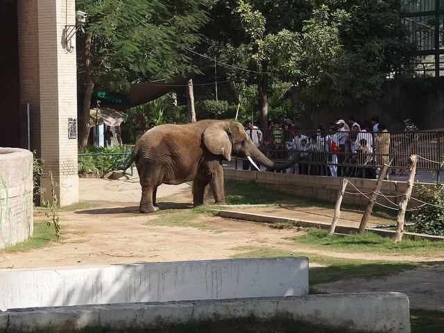 Lahore Zoo Image Guilhem Vellut